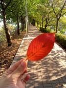 11월12일-가을과 겨..