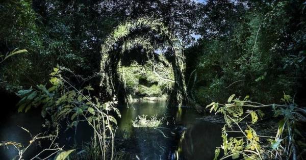 한밤 중 열대 우림에 나타난 거인