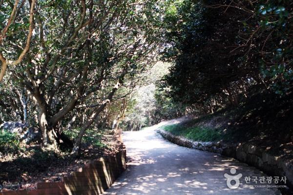 옥룡사지로 오르는 길. 양옆에 동백나무가 빽빽하다.