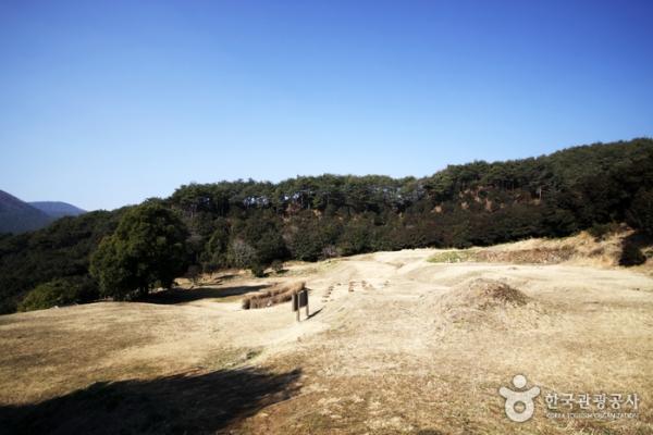 텅 빈 옥룡사지를 중심으로 동백나무가 숲을 이뤘다.