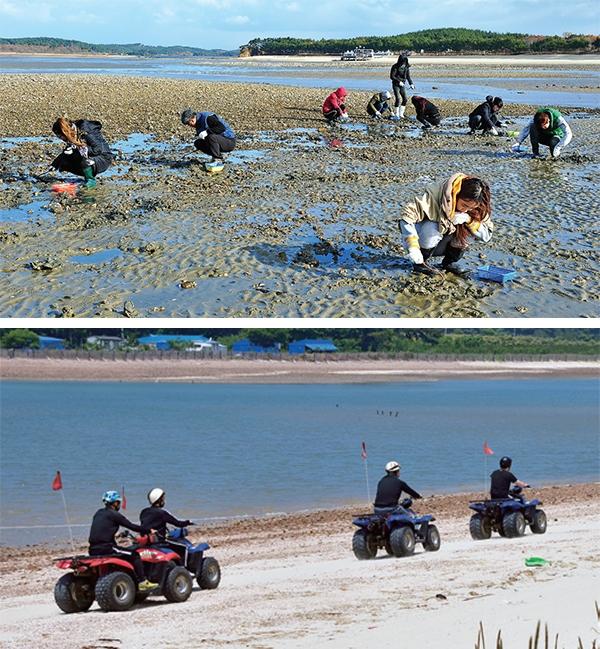 병술만마을을 찾은 관광객들이 맛조개 잡기와 ATV 체험을 하고 있다.